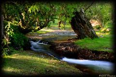 Tranquil Stream