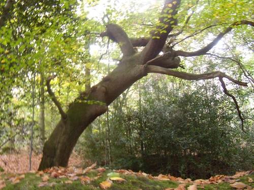 Striking tree