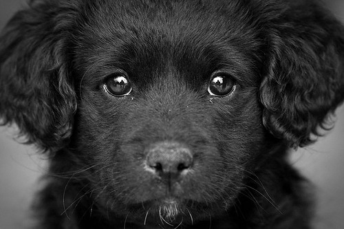 Through the eyes of a puppy