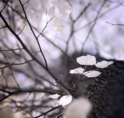 autumn wild color nature ecology leaves landscape outdoors woods dof bokeh ii uc 85 soe ef 12l ef8512lii abigfave infinestyle memoriesbook novavitanewlife artistictreasurechest miasbest aleksandrmatveev czdistagon czdistagoncom
