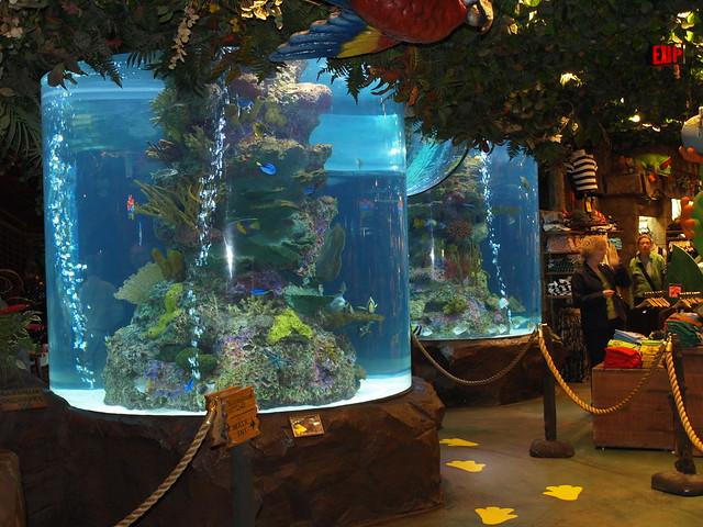 Indoor Aquarium Flickr Photo Sharing