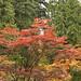 Arboretum - Oct 20 2007