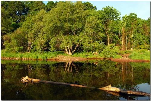 ontario canada reflection tree water creek river landscape log nikon stream milton soe naturesfinest d40 supershot haltonhills golddragon cans2s theunforgettablepictures goldstaraward goldenheartaward