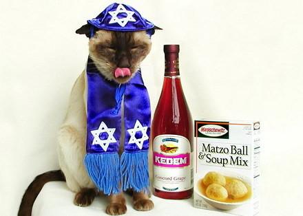 kosher cat