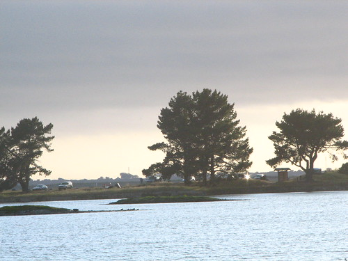 california landscape marsh arcata