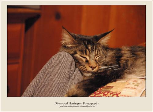Alnitak a-Snooze