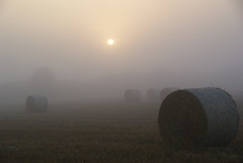 harvest in the sun and fog