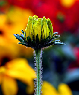 ~Thorny Beauty~