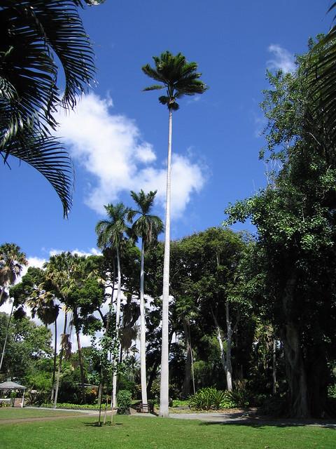 3207492846 a375dd0e32 for Foster botanical garden honolulu