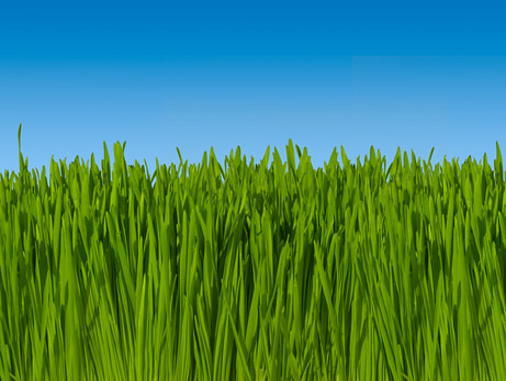 Background of Green Grass Against Blue Sky (macro focus)  16 inches wide  @  300dpi ~ Includes Clipping Path