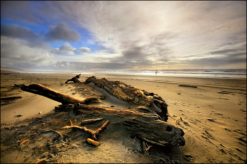 beach oregon coast driftwood seashore