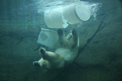 Polar Bear at Play