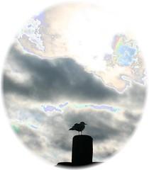 Solarized sea gull