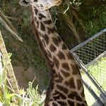 Los Angeles Zoo 054