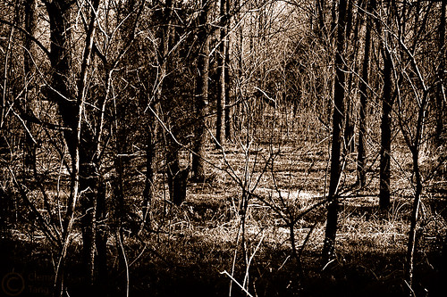 trees bw usa oklahoma monochrome sepia forest d50 geotagged 50mm woods nikon mysterious stillwater nikkor 50mmf18d primelens clementtang geo:lat=36130189 geo:lon=97103562
