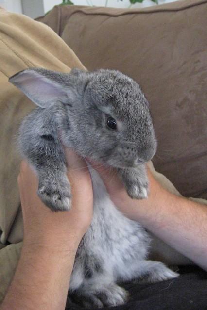ANGRY bunny baby | Flickr - Photo Sharing!
