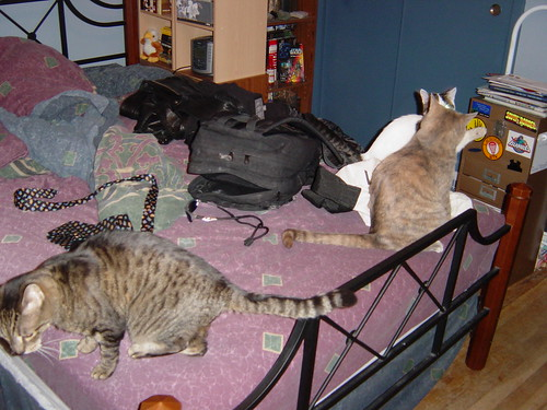 3 Cats on Bed