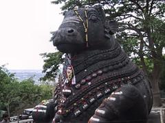 Mysore 10