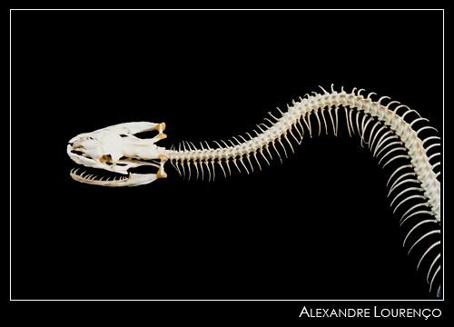 ossos da coluna vertebral yahoo dating