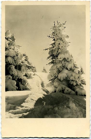 L'hiver - Sapins enneigés