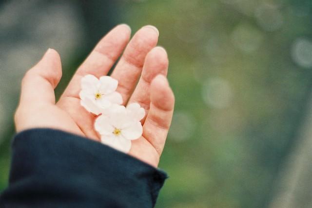 cute petals