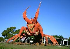Big Lobster