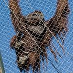 Los Angeles Zoo 080