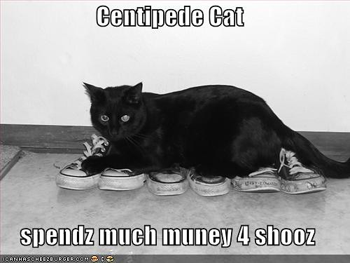 funny-pictures-centipede-cat-shoes