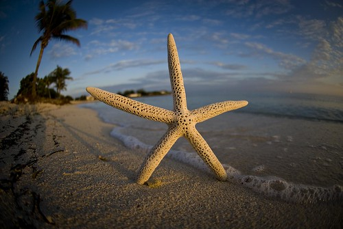 ocean beach keys sand surf waves starfish marathon tide wideangle palmtree pick floridakeys fisheyelens 105mm sombereobeach