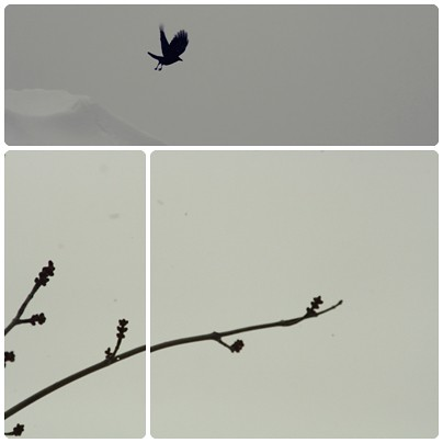 bird and branch