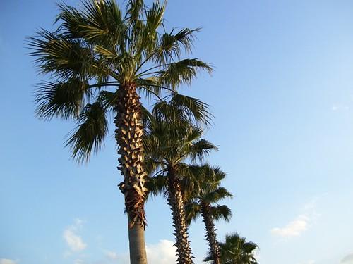Blue Sky & Palms