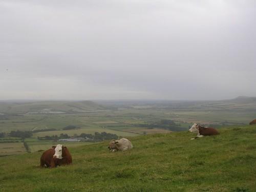 High rise herd