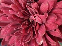 Flower in Santana Row