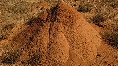 soil, sand, mound-building termites, geology, rock, wildlife,