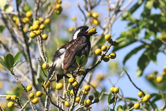 hornbill(0.0), flower(0.0), animal(1.0), branch(1.0), yellow(1.0), nature(1.0), flora(1.0), fauna(1.0), finch(1.0), coraciiformes(1.0), bird(1.0), wildlife(1.0),