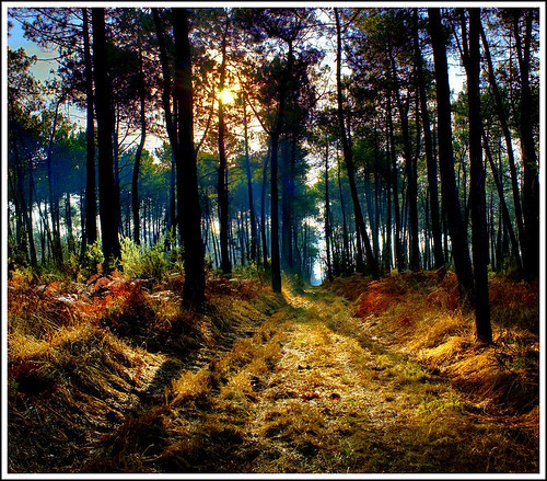 BRETAGNE - Broceliande - The forest ...