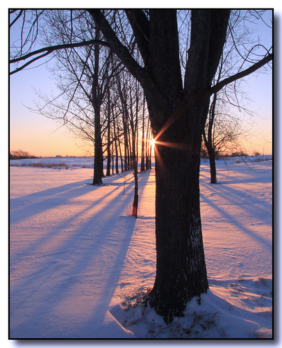 trees winter snow ontario canada rural sunrise canon landscape shadows lisas explore contrejour allrightsreserved sunflare invited tistheseason caledon naturesfinest blueribbonwinner 3404 50d canon50d colorphotoaward theunforgettablepictures proudshopper magicdonkeysbest tisexcellence mdtbmasterpiece getty2009 copyrightlisastokes getty20091008
