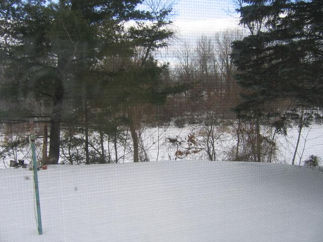 snow covered backyard and bayou flickr photo sharing
