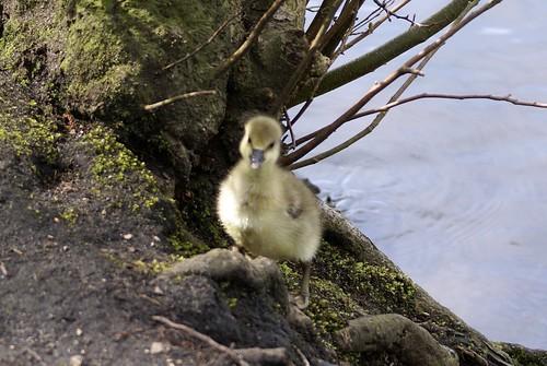 Derick180408 046 British Birds