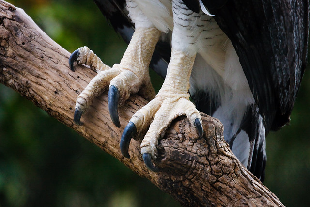 Animal Claws and Talons-Inspiration - a gallery on Flickr