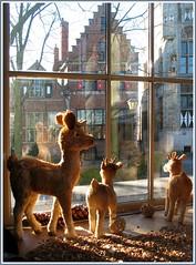 Fenster in Veere