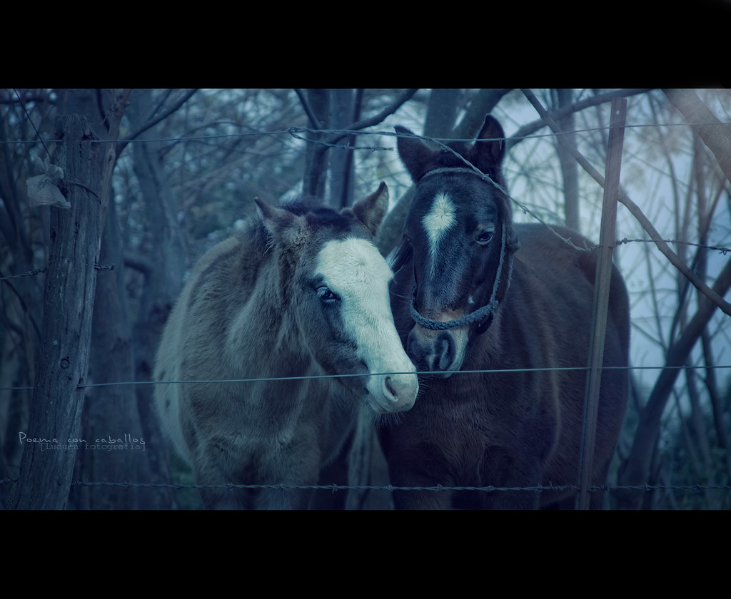 poema con caballos