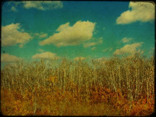 autumn sky colour texture clouds wow landscape bush grunge ameliepoulain aspen poplars quakingaspen theworldthroughmyeyes tremblingaspen prariesky avision |ash| skypoetry theothervillage borealnz colourartawards anniedaisybaby prairiegothicthanksken