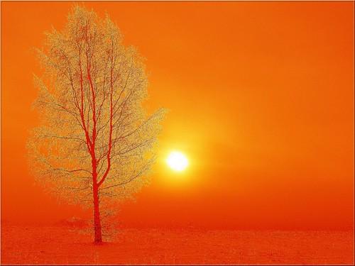 morning trees sun mist tree texture misty fog landscape bravo foggy dreamy puu puud päike morningfog hommik udu firstquality tekstuur mistysunrise maastik foggysunrise päikesetõus olympuse400 mywinners welcometoestonia anawesomeshot photofaceoffwinner janne4janne udunepäikesetõus udune