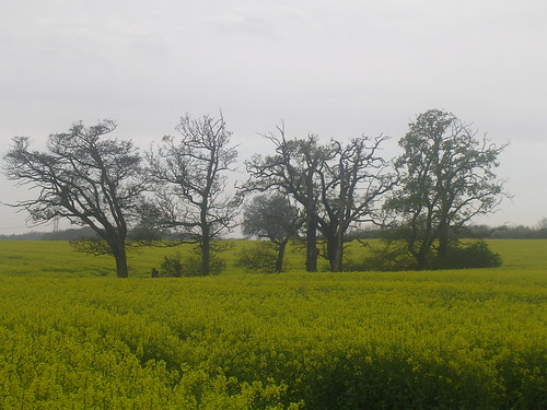 Trees in a yellow sea