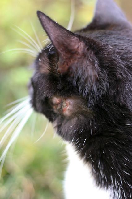 cat adoption cleveland