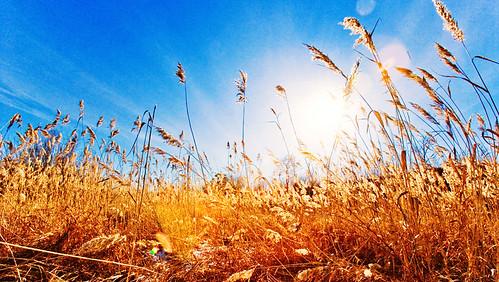 nature grass canon mongolia selenge aplusphoto mngl edorj erhemchuhal erkhemchukhal erkhemchukhaldorj erhemchuhaldorj эрхэмчухал