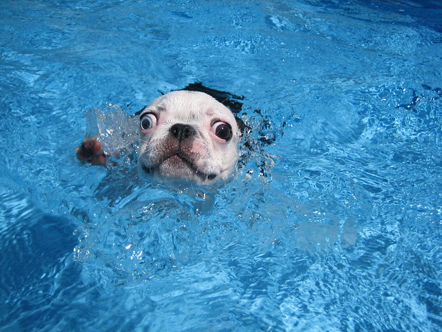 Doggie paddle!