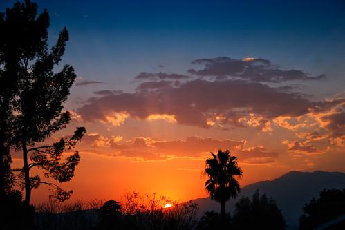california sunset yard back