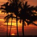 Sunset with the palm trees. Anaeho'omalu beach. 496-35.